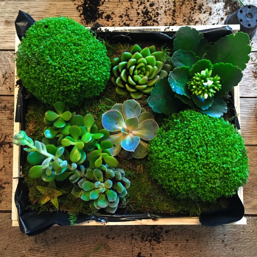 green succulents box plants