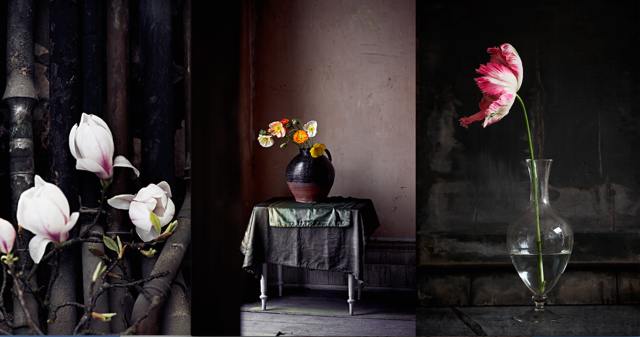 Still life floral displays styled by Mary Norden and photographed by Polly Wreford