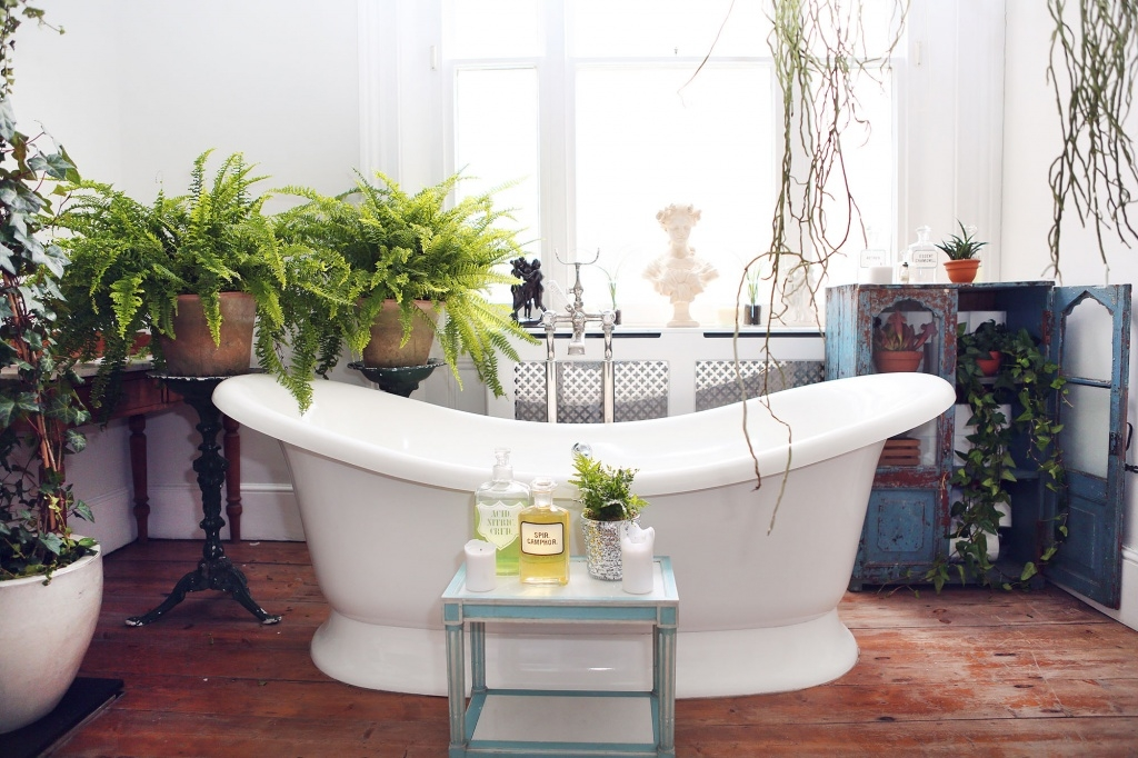 house plants are a great way to get the happines vive in your home. These ferns are ideal for a bathroom and easy to keep house plant