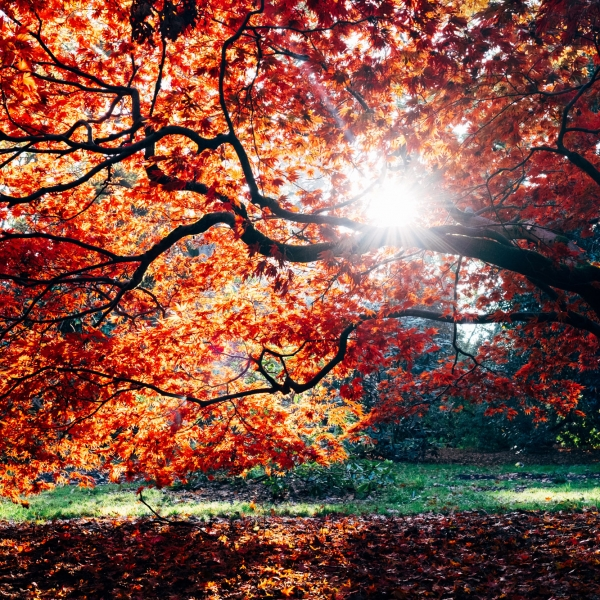 colour psychology and the autumn personailty