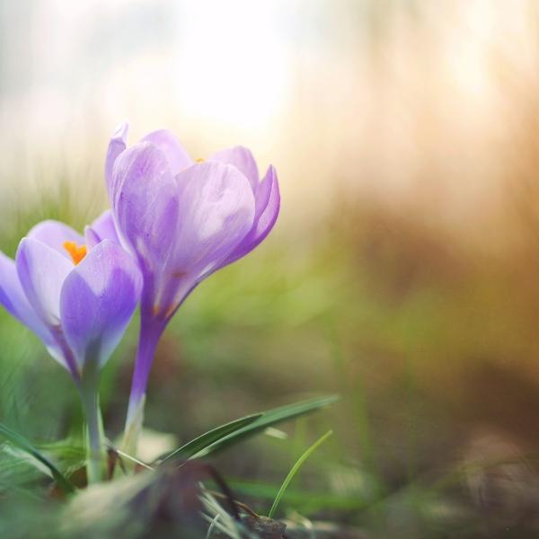 The spring personailty